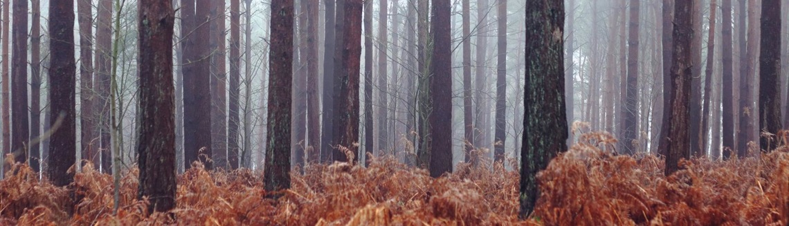 A misty wood, Dawn, Member